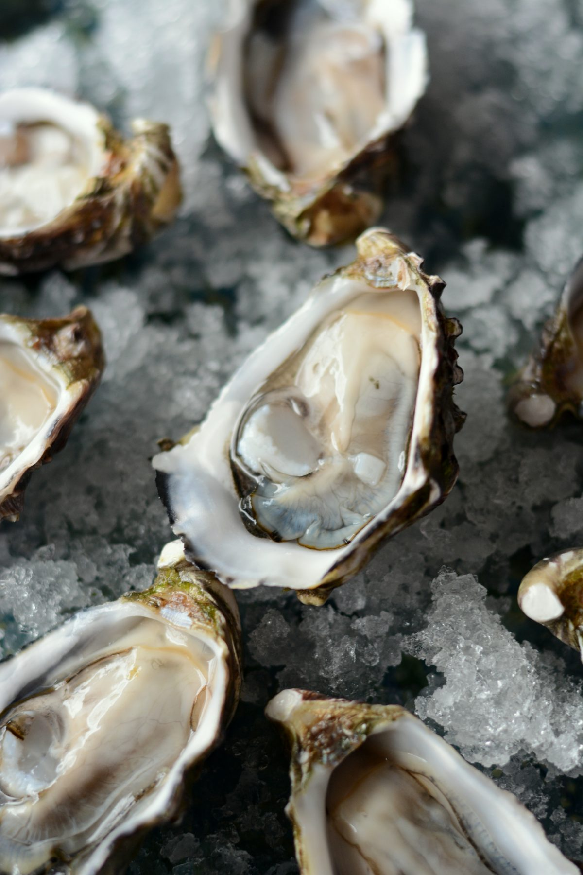 Freshly shucked oysters - food photography & styling - thespiceadventuress.com