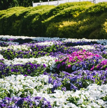 Tesselaar KaBloom flower festival - thespiceadventuress.com