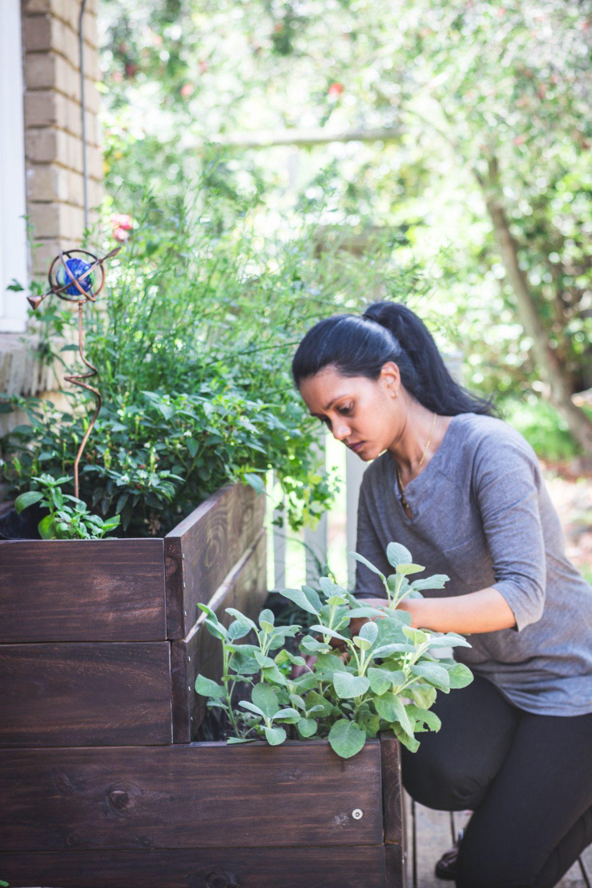 Herb garden - thespiceadventuress.com