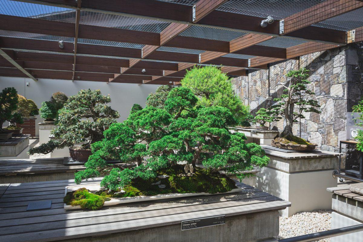 National Arboretum Canberra - thespiceadventuress.com