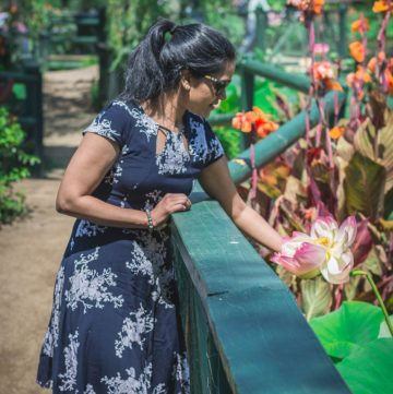 Blue Lotus Water Garden - thespiceadventuress.com